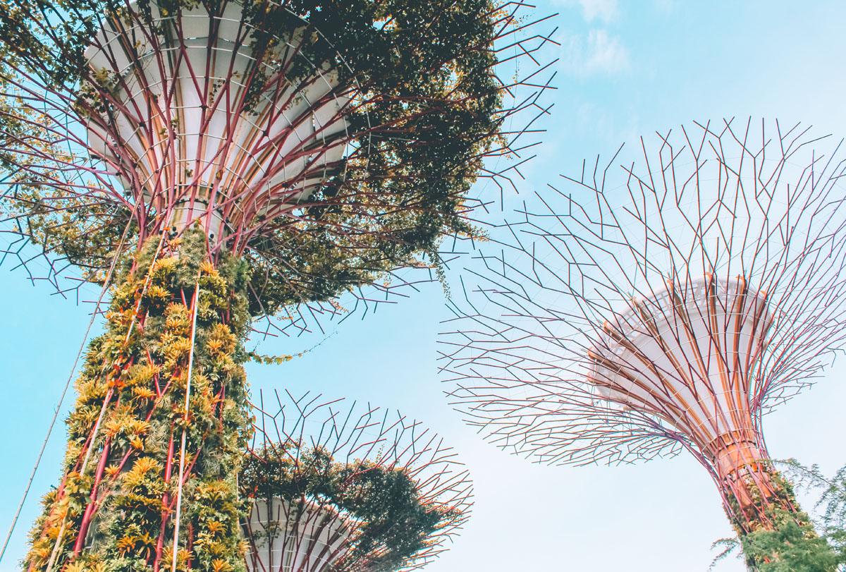 The futuristic Supertree Grove - Singapore itinerary
