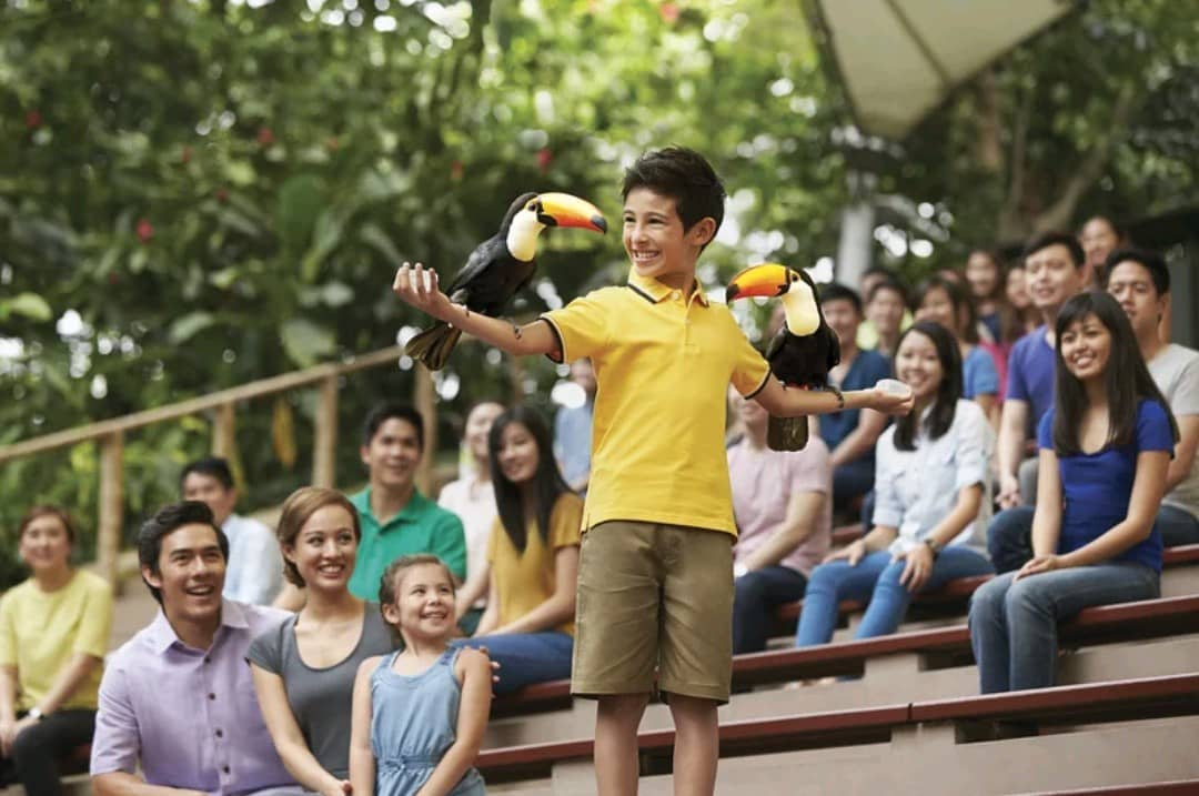 Boy playing with toucans in Jurong Bird Park - Singapore itinerary