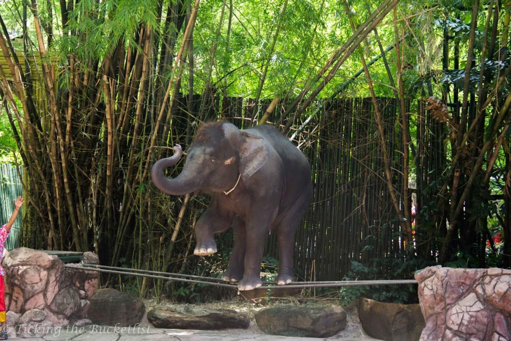 Elephant show at the Safari World Bangkok