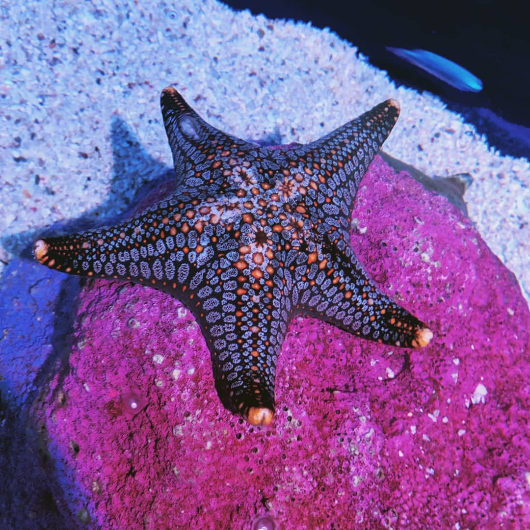 sea stars in Sea Life Bangkok
