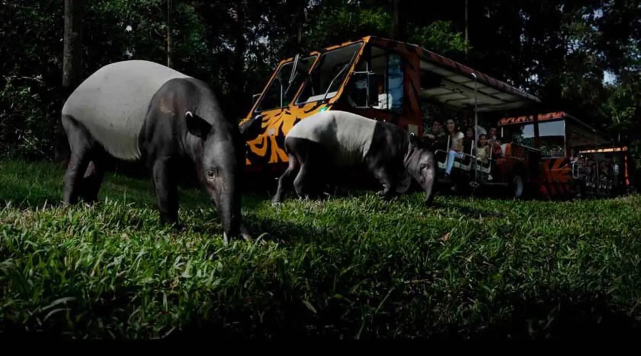 Travel to Singapore - Night Safari