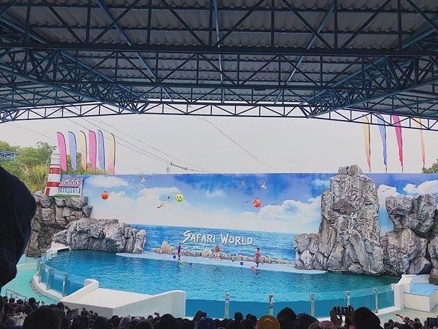 Dolphin show at Marine Park