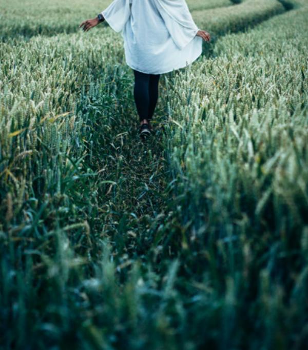 Campo trigo verde