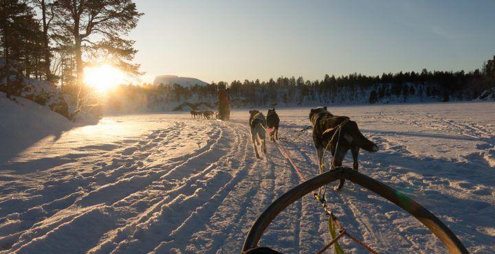 "Fins Lapland ""5-daagse reis Ultimate experience"""