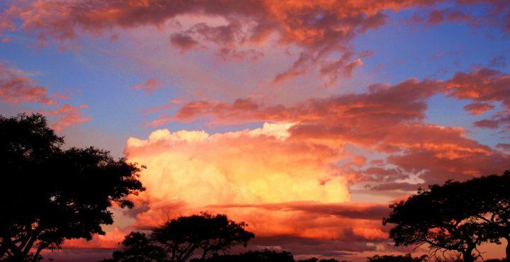 Zuid-Afrikaanse natuurgids vertelt