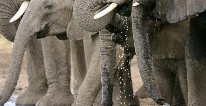Handige tips en weetjes over Zuid Afrika