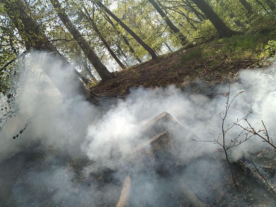 Płonął las w Żdanowie - Zdjęcie główne