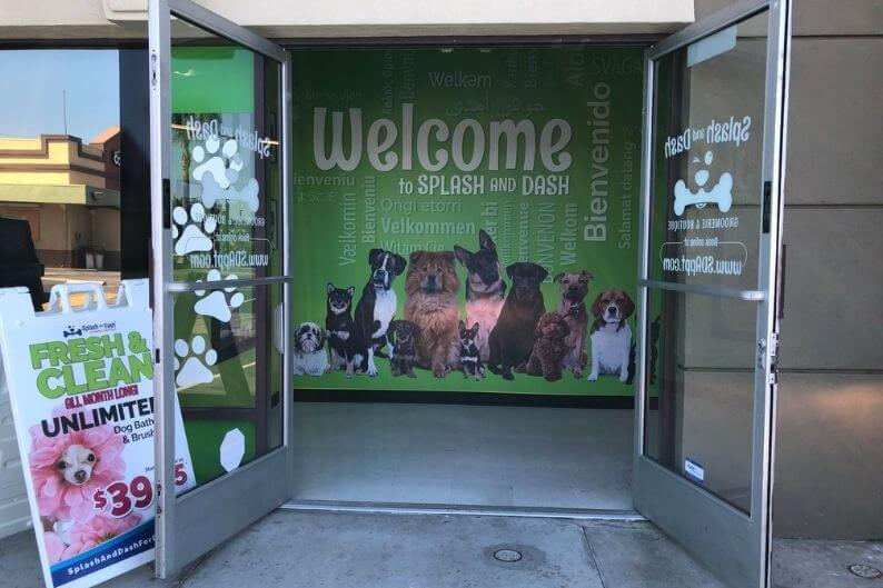 A welcoming view of the Splash and Dash pet franchise