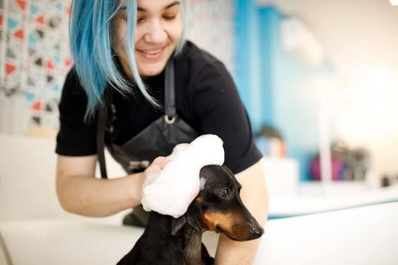 A groomer gives a dirty pup a bath.