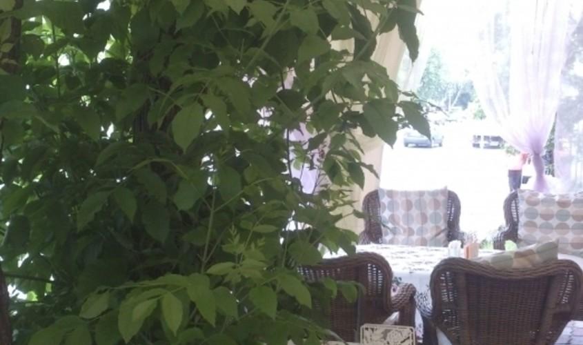 Летняя веранда на 40 персон в ЮАО, м. Нагорная, м. Нагатинская, м. Академическая, м. Профсоюзная от 2500 руб. на человека