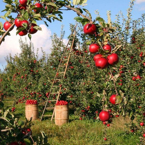 Orchards, Vineyards, Farms & Nurseries