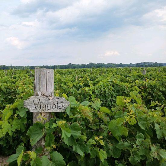 Snow Farm Vineyard