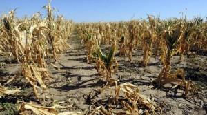 Agricoltura in ginocchio per il caldo, interviene l'Unione Europea