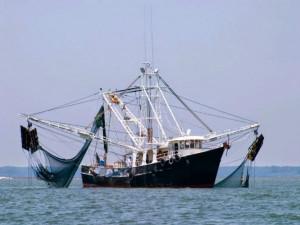 Scatta il fermo pesca nel Tirreno e nello Ionio
