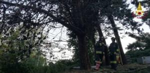 Verbania: un albero cade sulla linea ferroviaria