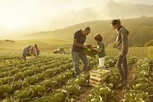 Lavoro: 8 italiani su 10 sognano un figlio agricoltore