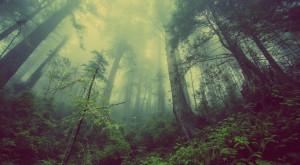 Festa alberi, da rinascita boschi 35mila posti di lavoro