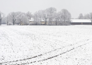 Maltempo: dopo la siccità, sotto la neve il pane