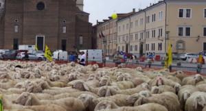 Già mille pecore in piazza contro Trump