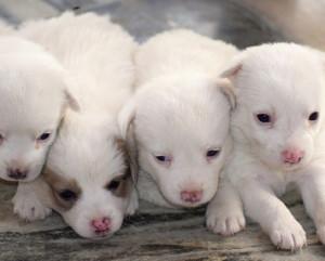 Animali, traffico cuccioli vale 300 milioni all'anno