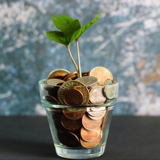 Pengar och växt i glas