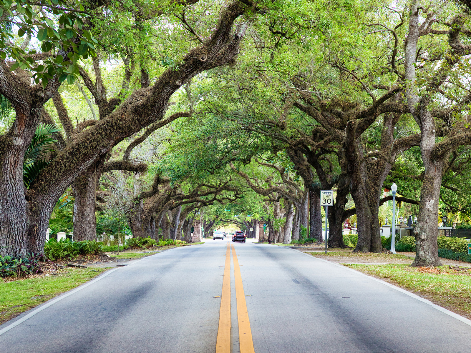 Moss and trees growing around a road in Coral Gables