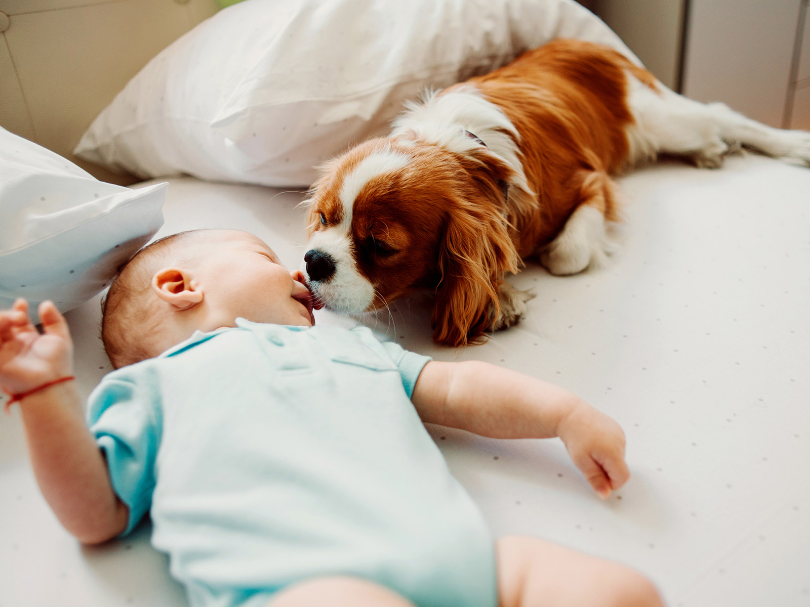 Baby laying on a bed with a small dog next to the baby licking the babies face
