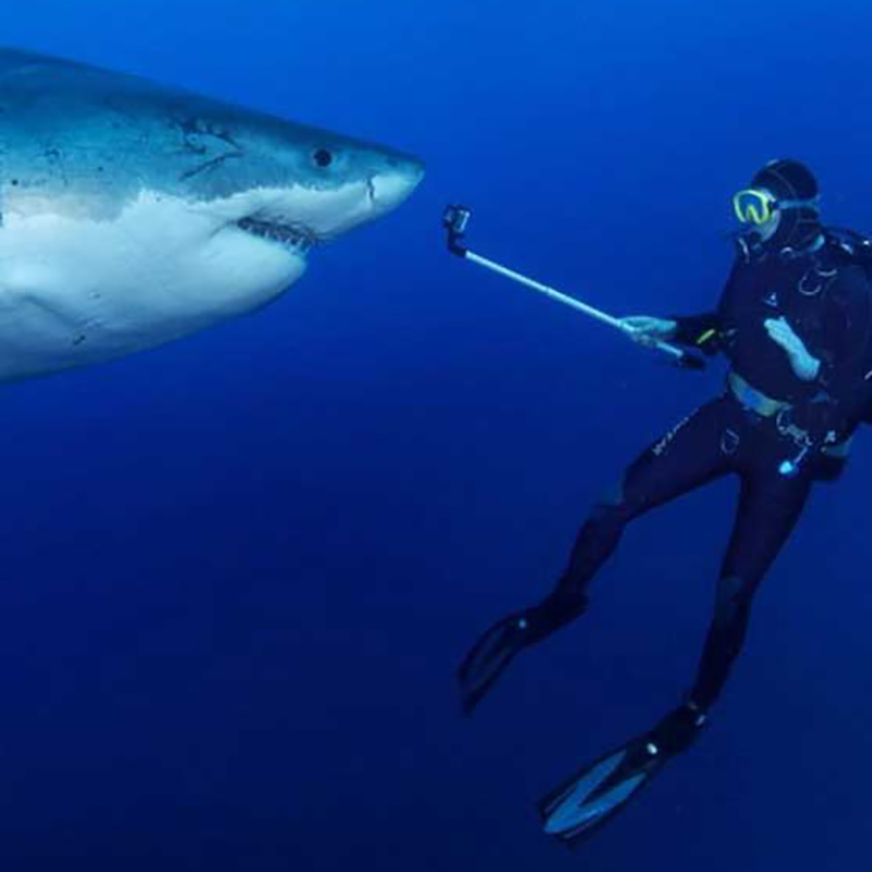 Freek Vonk underwater taking video of a shark who is right across him