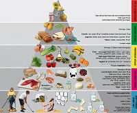 sharma-obesity-nutritional-pyramid-bariatric-surgery