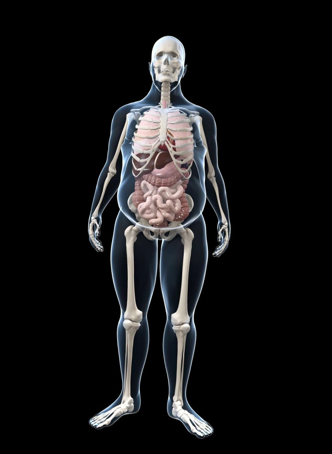 obesity_skeleton