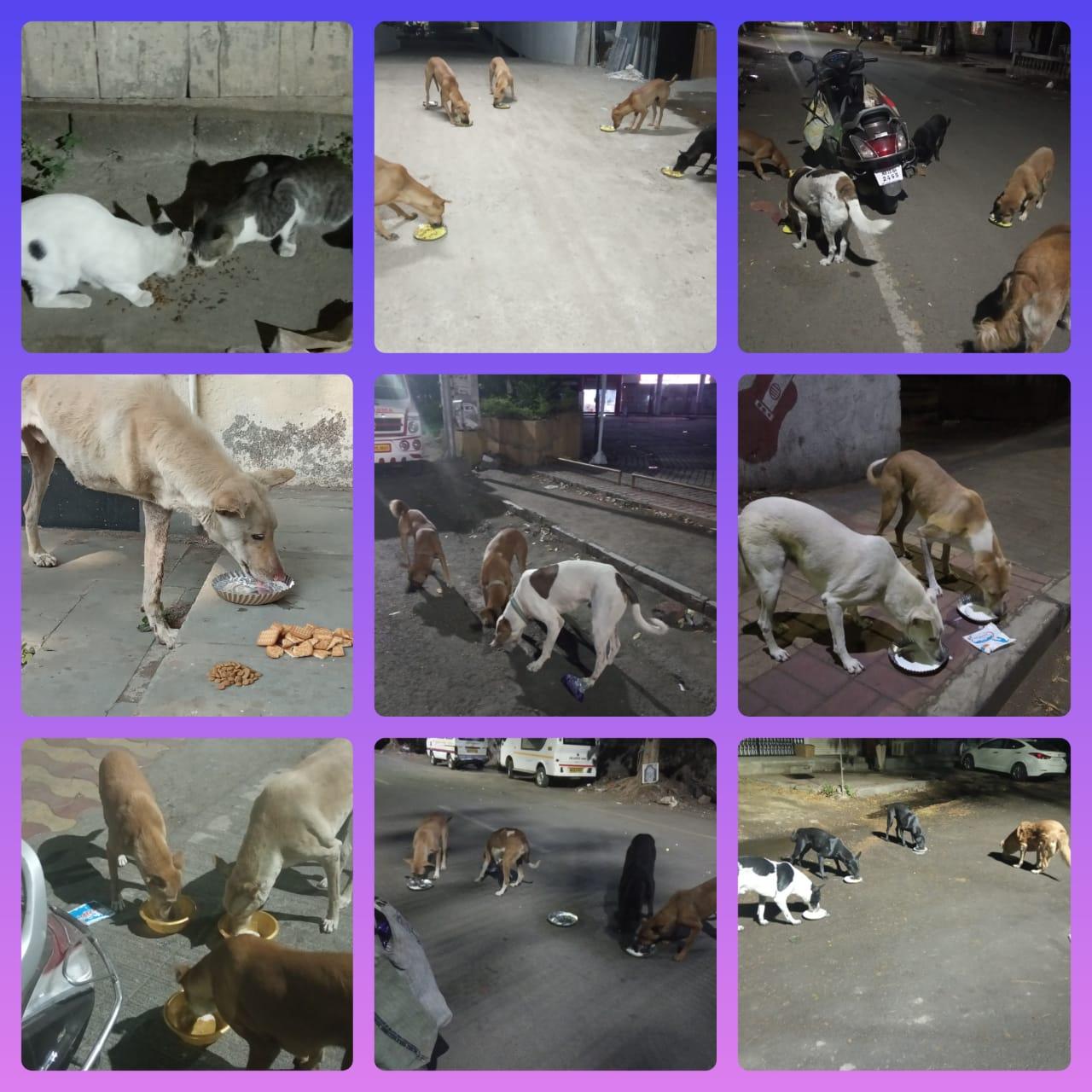 JOSHConnect Foundation Feeding Stray Dogs