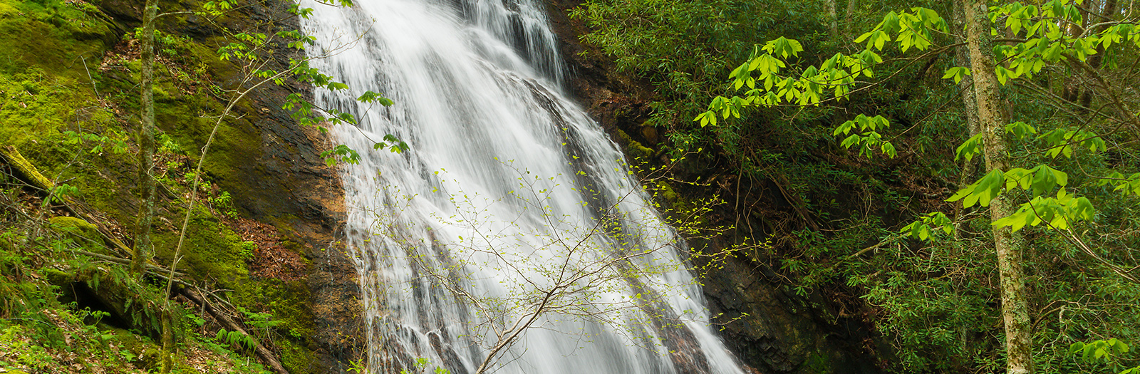 Photo of Rufus Morgan Falls