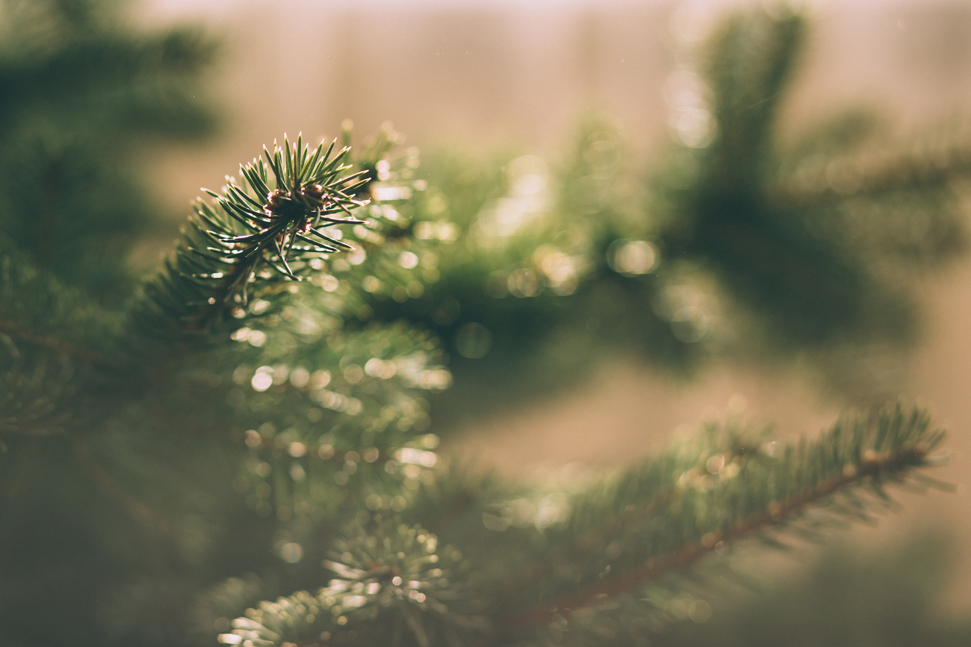 An enchanted Christmas starts here: 11 reasons to visit a choose-and-cut tree farm in the N.C. Mountains of Jackson County