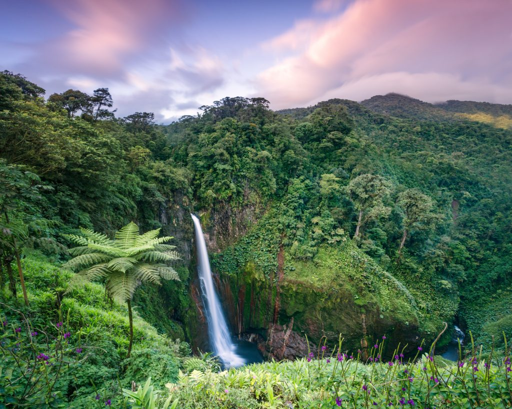 A wooden bridge stretches into a dense jungle.