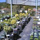 Cédrus Kertészet Kertész Arló Bátonyterenye