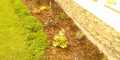 Növény beültetések
