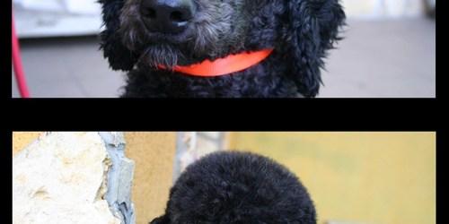 kutyakozmetika