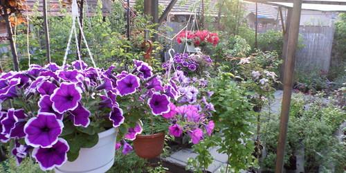 Kertész Szentes Mezőtúr