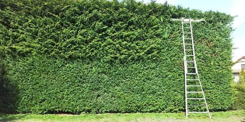 Kertész Gödöllő Gödöllő