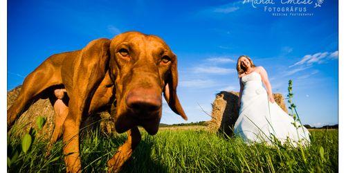 Esküvői fotós Kulcs Balatonboglár