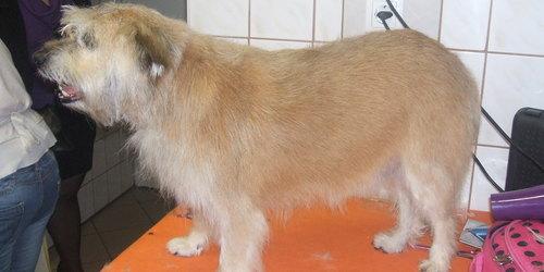 Kutyakozmetikus Debrecen Debrecen