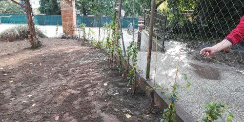 Sövénynövény ültetés