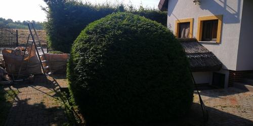Kertész Gárdony Ráckeve