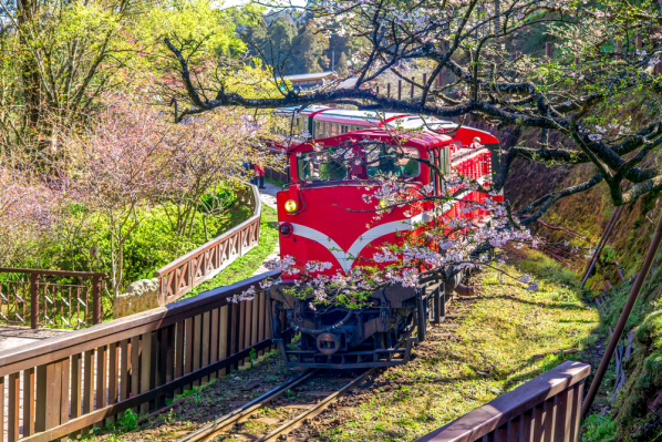 Alishan Scenic Area and Railway sakura in Taiwan