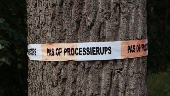 Aansprakelijkheid voor schade door eikenprocessierups