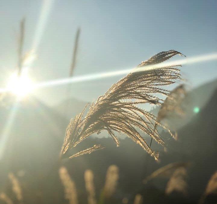 學習馬雅曆法,帶給我詩意般的感受|馬雅學員Kin87 太陽藍手 分享文
