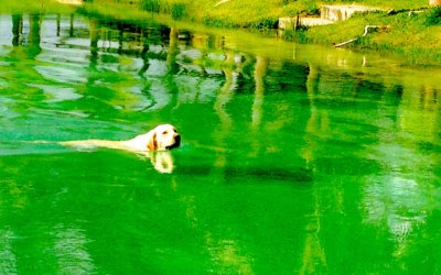 Kin90水晶白狗 愛有不同的名字,其中一個叫體諒。