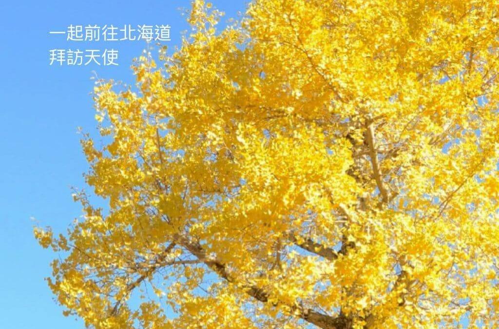 Kin93月亮紅天行者|讓我們一起夥伴前往北海道拜訪天使