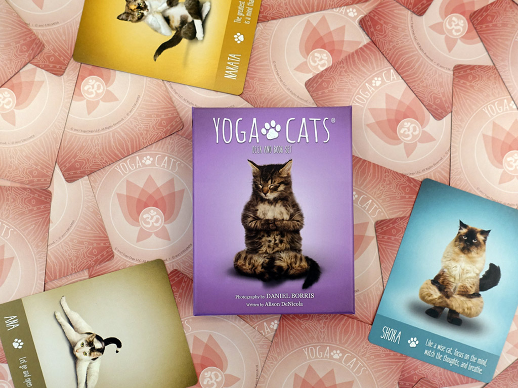 牌卡測驗|貓咪瑜伽卡:俏皮有智慧的貓咪們,將透過瑜伽帶來日常的指引與解答