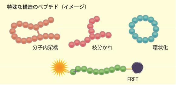 ペプチド合成 コスモ・バイオ受託製品